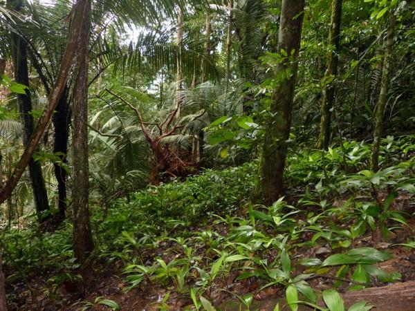 Sous-bois forestier ©Sophie Gonzalez