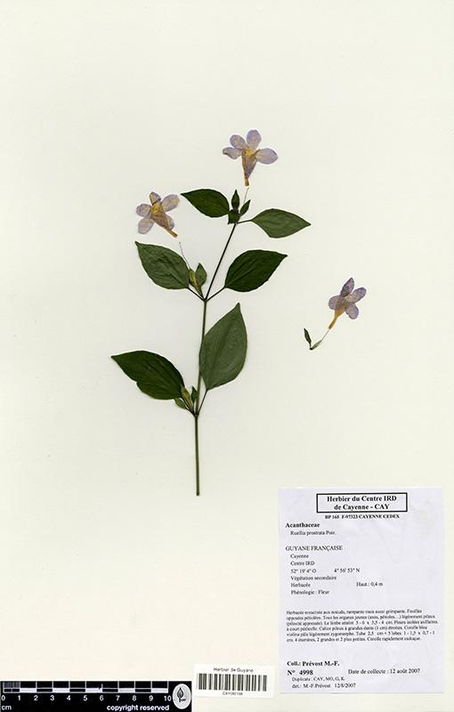 L'Herbier de Fanchon