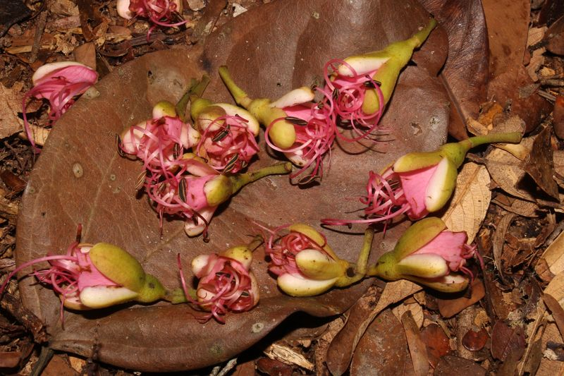Fleurs et Fruits tombés au sol
